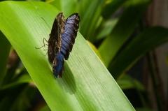 Vlindertuin St Maarten